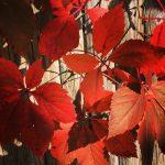 Warm fall colors